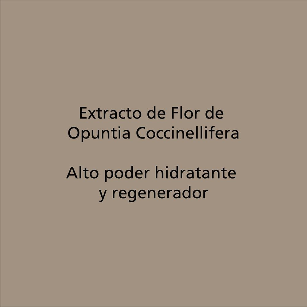 Flor de Opuntia Coccinellifera